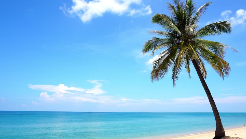 Clear blue sky with palm tree on the beautiful tropical beach in summer season at phuket thailand