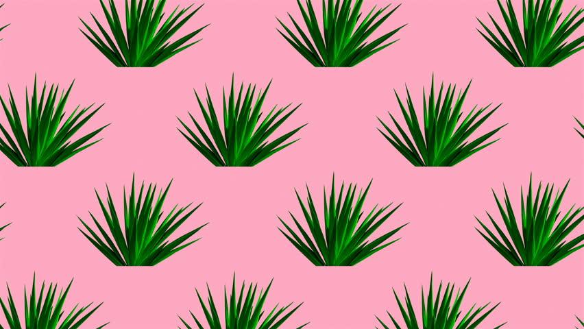 Aloe background. Minimal motion design