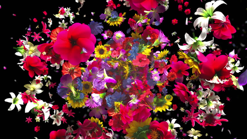 High quality exploding colorful flowers in 4K | Shutterstock HD Video #1010710064