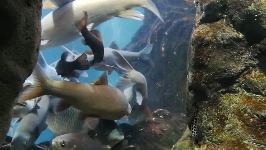 Marine life in the oceanarium of Lisbon, Portugal