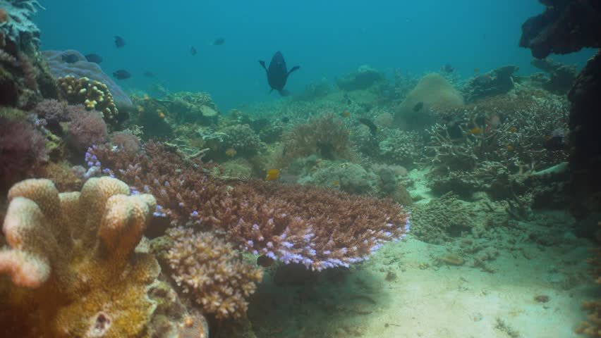 Tropical fish on coral reef at diving. Wonderful and beautiful underwater world with corals and tropical fish. Hard and soft corals. Philippines, Mindoro. #1011235604