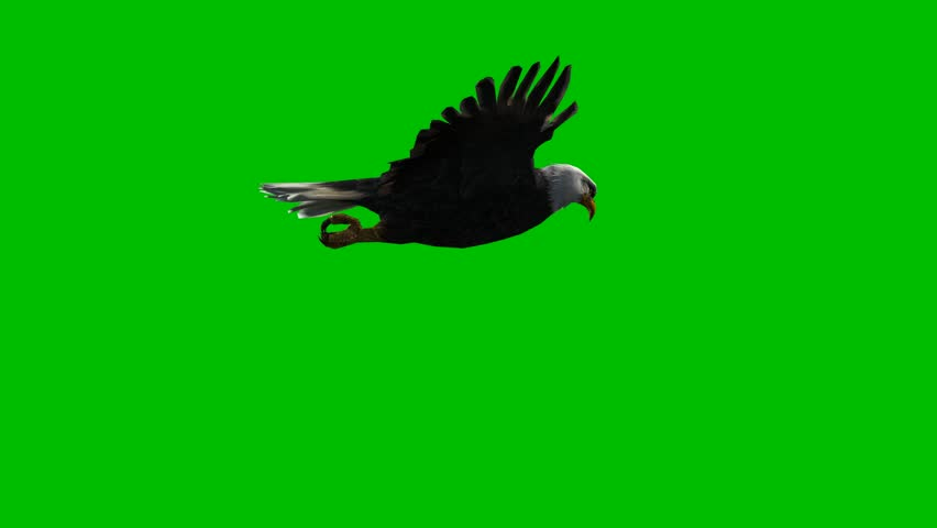 Eagle gliding green screen | Shutterstock HD Video #1011280724