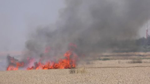 A field of wheat was hit by a fire kite launched in Gaza during demonstrations in commemoration of Nakba Day. The fire burned wheat fields and forests in Israel.
