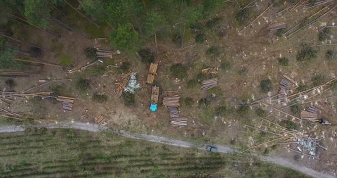 Aerial view crane loads cut tree trunks for transportation to forest plantation, deforestation trunk tree with special car