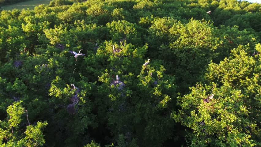 Aerial 4k Drone Footage  the Stock Footage Video (100% Royalty-free)  1011419504   Shutterstock