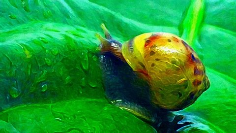 Abstract Snail Crawling Illustration with Colorful Oil Painting Style and Animation Footage