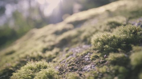 Macro Green Moss on Rock with Flare From Sun Light