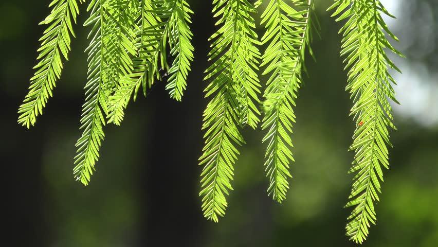 Header of cedar
