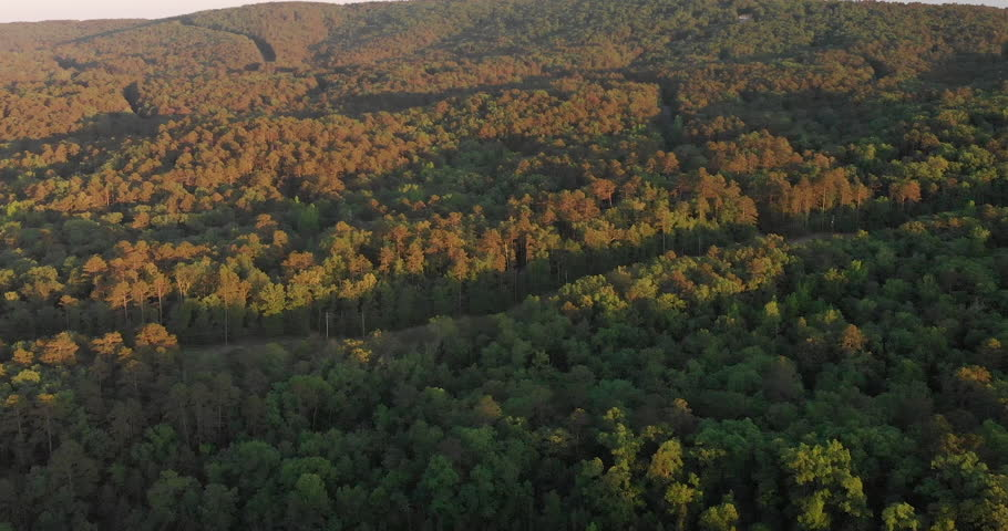 Flying over a Dense Forest | Shutterstock HD Video #1011680714
