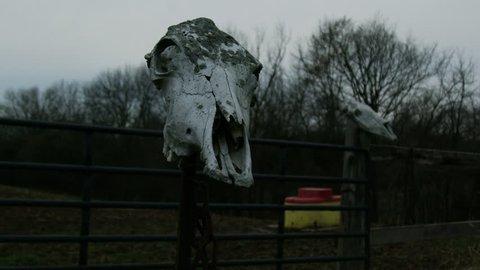 Cow Skull Mounted On Post At Creepy Farm