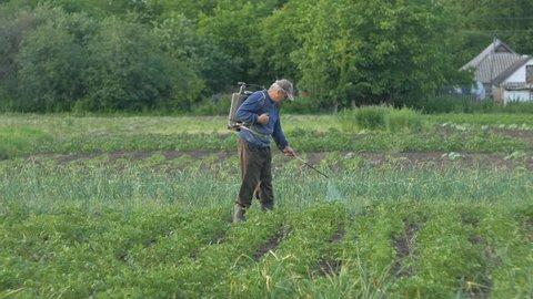 Gardener man sprays pesticides on potato leaves beetles