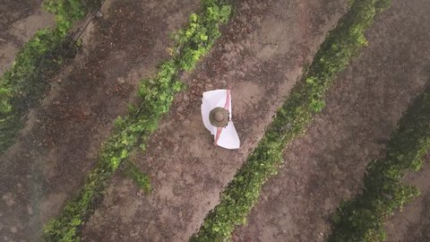 Brunette woman dancing inside the vineyards wearing a beautiful dress. Aerial view, 4k