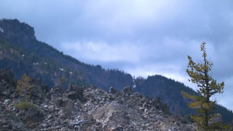 Footage of a tree in the obsidian flows in front of Paulina Peak.