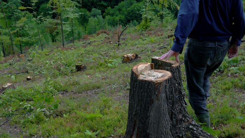Man goes through forest and looking cut down trees