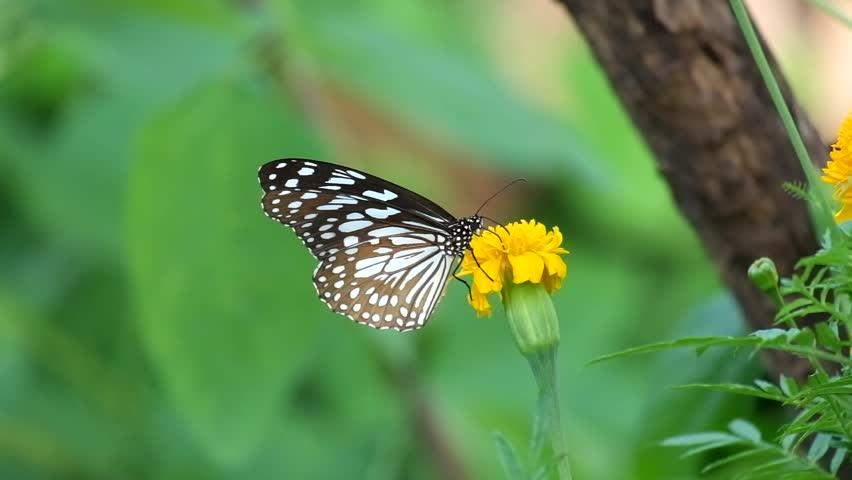 Butterfly on flower, Butterfly feeding on flower #1012375064