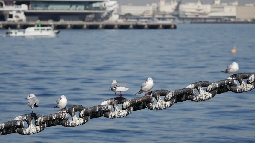 Seagulls resting on the anchor chain of a ship.