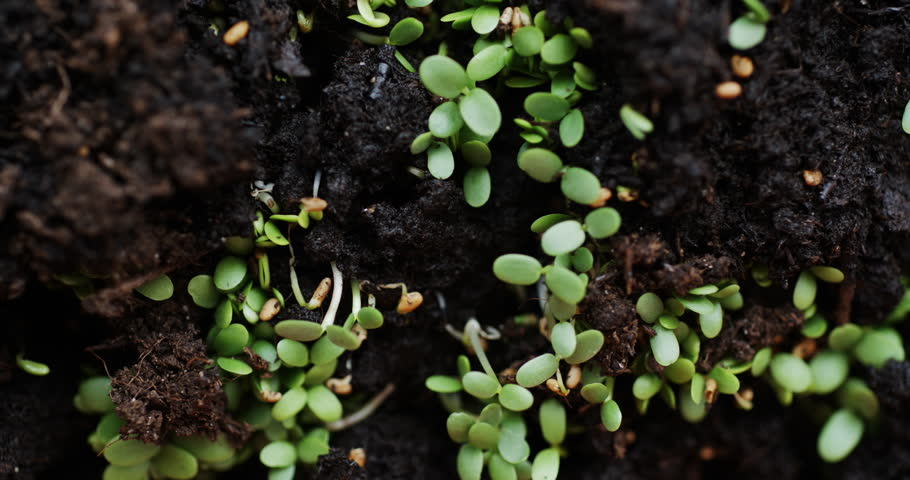 Slide macro shot of fresh seedlings sprouted throughout earth | Shutterstock HD Video #1012534724