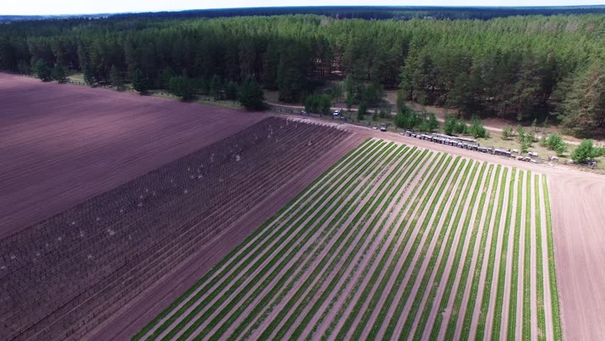 Aerial Photography  Seedlings of Coniferous Stock Footage Video (100%  Royalty-free) 1012789694 | Shutterstock