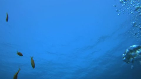 Blue Water and Bubbles. Picture of underwater blue water surface and colourful fish in the tropical reef of the Red Sea Dahab Egypt.
