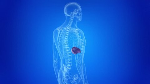 medically accurate 3d animation of spleen cancer