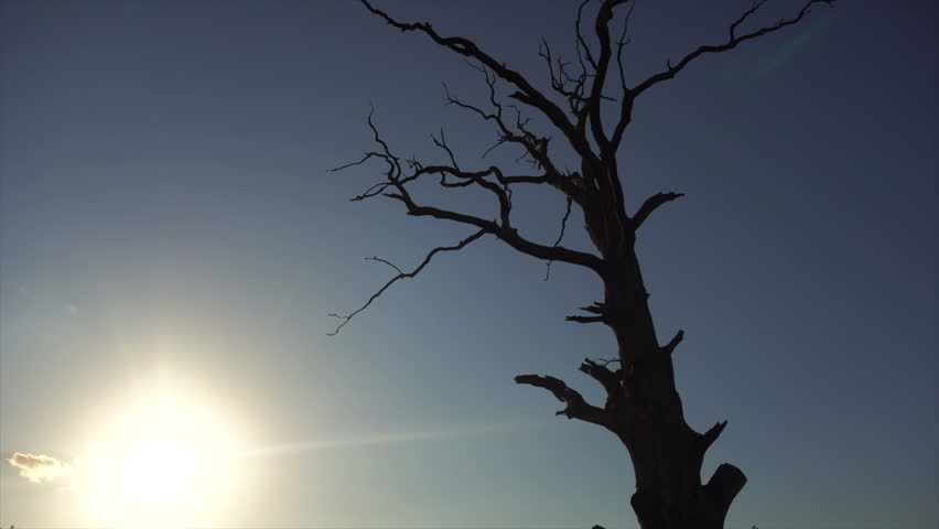 Dry tree against the blue sky | Shutterstock HD Video #1013205404