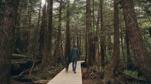 A woman walks her dog along a boardwalk past old growth trees in a rainforest on Vancouver Island.