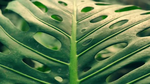 stunning nature of amazonian forests. close-up of a palm leaf.