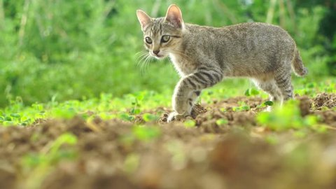 curious baby cat exploring the garden