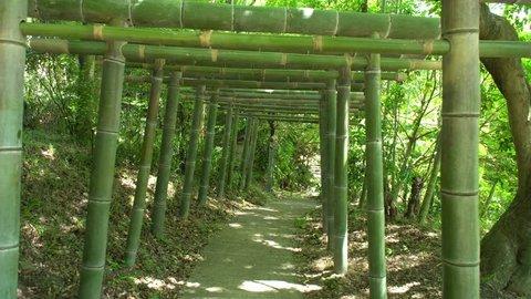 following a bamboo torii tunnel in Fushimi Inari Shrine forest