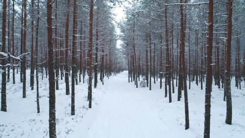 Snow covered road in forest in winter dolly shot slow motion