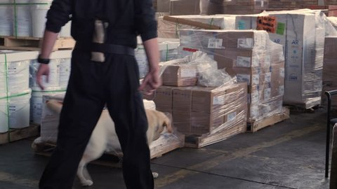 police labrador dog is searching the drug, search warehouse