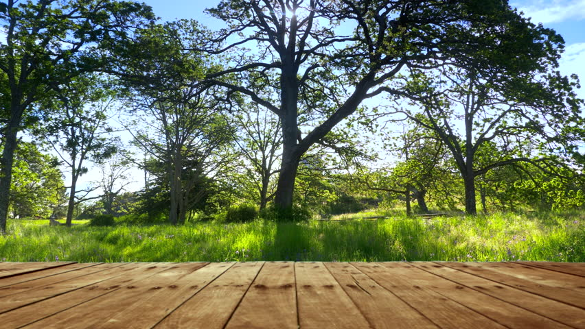 Park Wood Table Deck Nature Stock Footage Video 100 Royalty Free 1014199274 Shutterstock