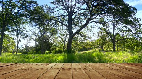 Park Wood Table Deck Nature Background, Outdoor Space National Park