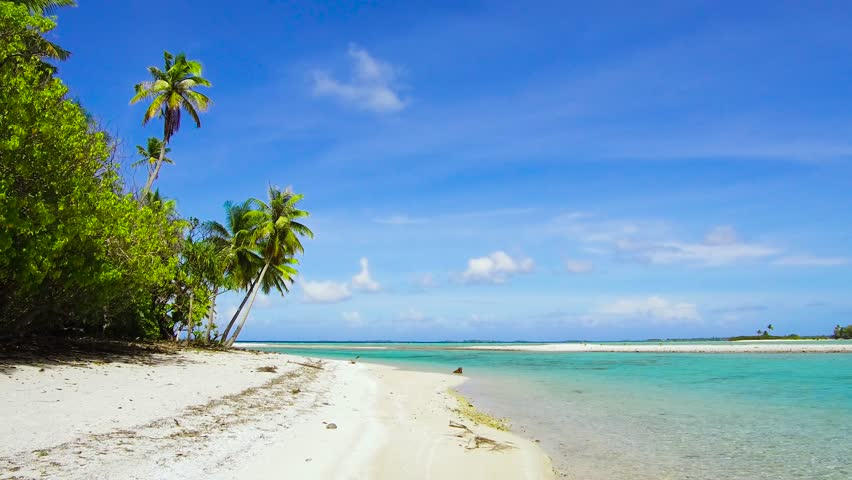 Travel, seascape and nature concept - tropical beach with palm trees in french polynesia | Shutterstock HD Video #1014248084