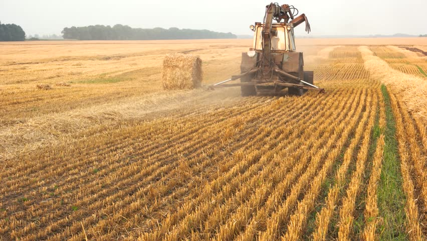 Tracktors working on the farm. Yellow field of dry hays.