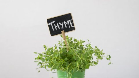 healthy eating, gardening and organic concept - green thyme herb with name plate in pot on table