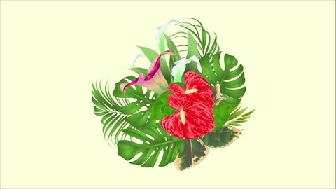 Video animation seamless loop  floral arrangement bouquet with tropical flowers  with beautiful lilies Cala and anthurium, palm,philodendron and ficus motion