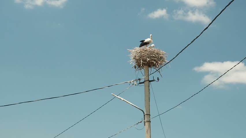 Storks Family in its nest on a pillar on Sky Background.