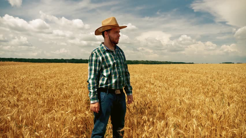 Disappointed farmer looking into the grain field, feeling sad, angry and worried about the wheat plantation - Crop failure, harvest failure - diminished crop yield. Low crop yield.