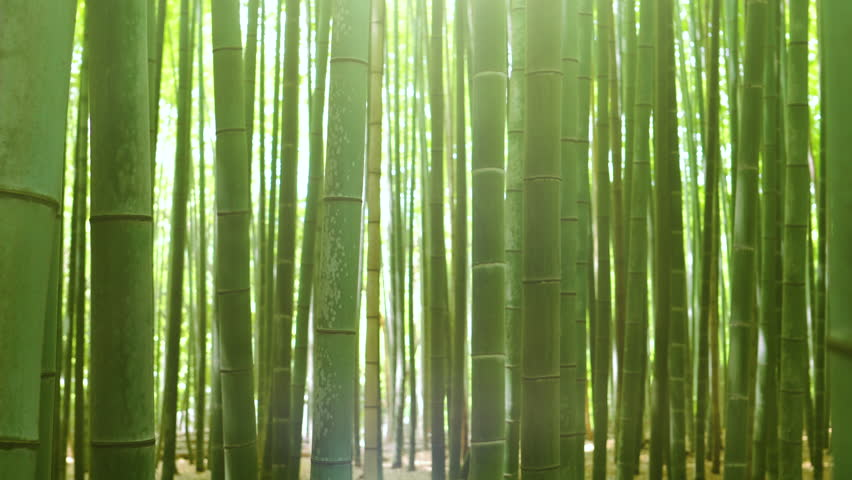 Close-up Zooming out and Elevating Shot of the Beautiful Bamboo Forest with Leaves and Sun Shining Through the Tree Tops. | Shutterstock HD Video #1014801374