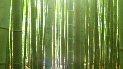 Close-up Zooming out and Elevating Shot of the Beautiful Bamboo Forest with Leaves and Sun Shining Through the Tree Tops.