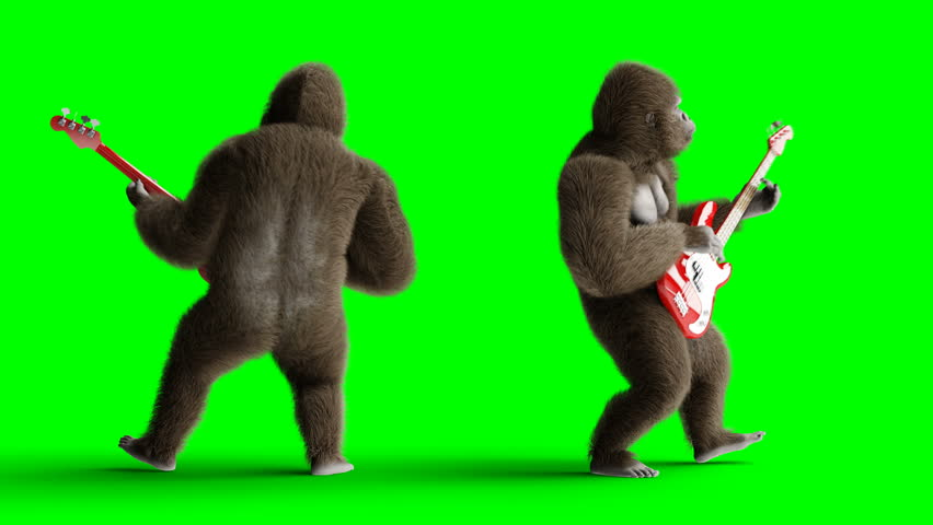 Funny brown gorilla play the bass guitar. Super realistic fur and hair. Green screen 4K animation.