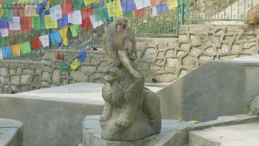 Monkey sits on the statue in Swayambhunath temple. Kathmandu, Nepal.