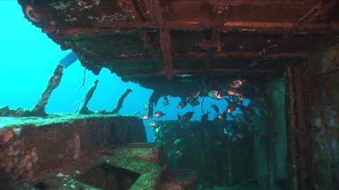wreck underwater shipwreck with fish around