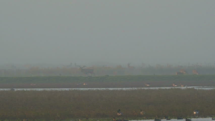 Distant view on group of konik horses and deer in nature reserve, netherlands