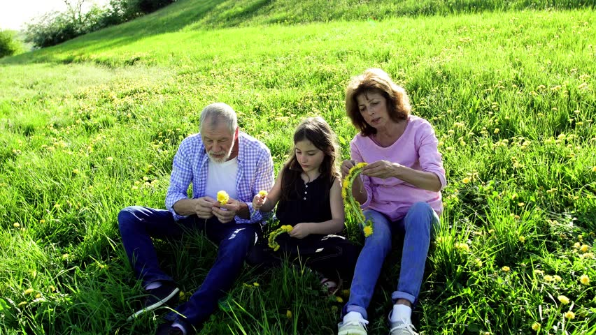 Senior couple with granddaughter outside in spring nature, making dandelion wreath. | Shutterstock HD Video #1015014214