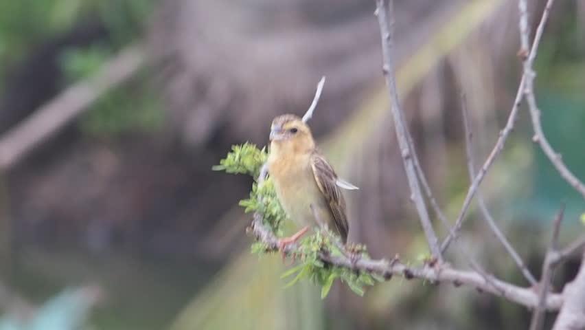 Singing bird | Shutterstock HD Video #1015159744