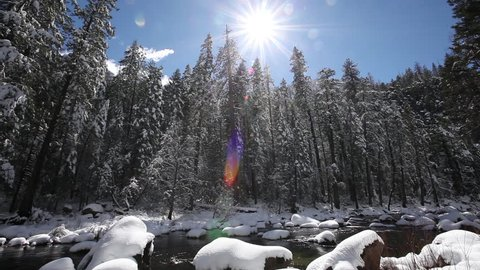 Real time low angle wide shot of blue sky and the sun casting a lens flare melting snow off of forest pine trees and snow covered river rocks in the Merced river in Yosemite National Park, California