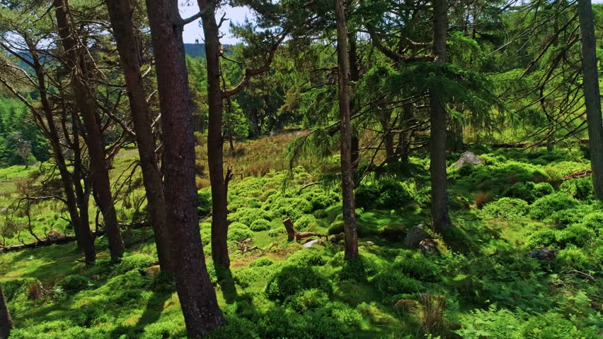 Aerial shot of forest in Wicklow Mountains.  Beautiful irish landscape.Ireland.Europe. | Shutterstock HD Video #1015209754