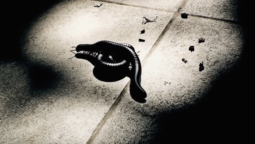 Two scary centipedes crawling and mashing in a spot light on the ground, darkness all around.